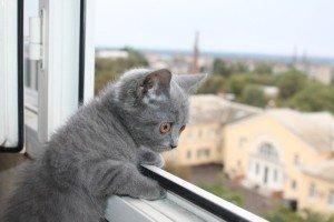 Кот, пластиковые окна Омск